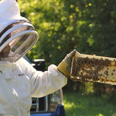Bees produce more than honey. More people are becoming aware of the usefulness of beehive products like honey, propolis, beeswax and pollen.