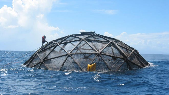 An globe-shaped aquaculture cage sits on the surface for cleaning at Snapperfarm Inc., a commercial fish farming operation off Culebra, Puerto Rico.