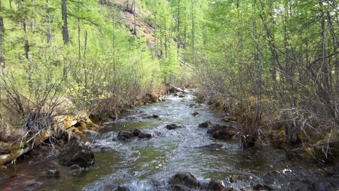 One of the smaller streams in the Central Siberian Plateau where the UNH team took samples.
