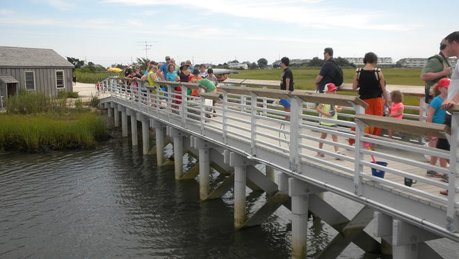 Activities on the dock at the Wetlands Institute, the popular environmental center on Stone Harbor Boulevard.