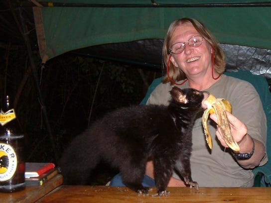 MSU zoology professor Kay Holekamp feeds a busybaby