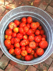 Tomatoes from Cindy Brandt's garden that will be hand-cut,