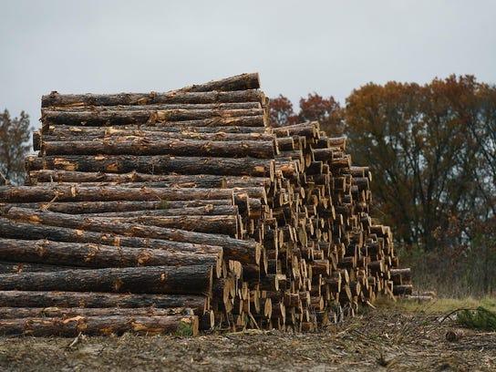 Pine logs await transport Oct. 29 in Sherburne National