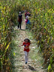 Get lost in a corn maze at Fiddle Dee Farms.