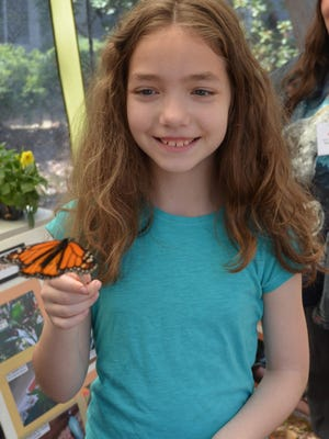 Sara Reed, 9, of Vineland feeds a butterfly inside the Master Gardener's Butterfly Tent at the Eco Fair on Saturday.