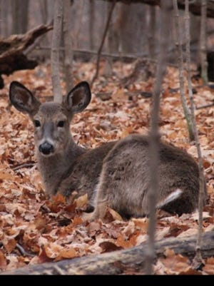 Farmington Hills officials are considering an ordinance making it illegal to feed deer.
