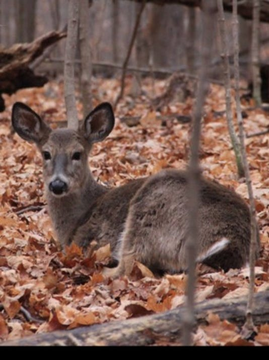 636258678987129432-recreation-deer.jpg