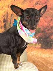 Buttercup is available for adoption with Friends for
