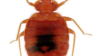 Bed bugs are a growing presence in all 50 fifty states, and once they have infested an apartment, it's important to address the problem immediately.