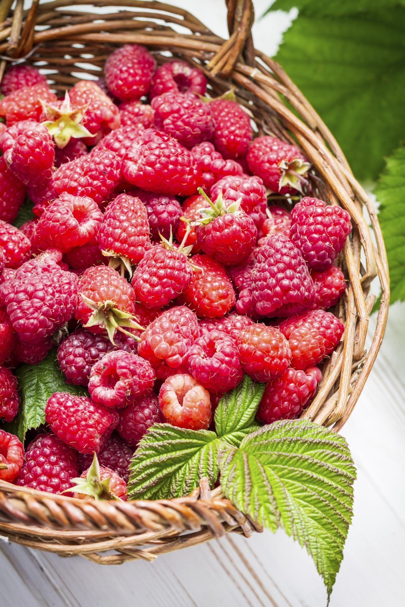 How to prepare raspberries for winter How to care for raspberries in autumn 47