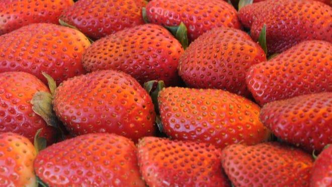 Star file photo A box of fresh California strawberries at Conroy Farms in Oxnard.