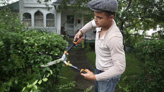 Jose Chavez uses hand operated hedge trimmers to trim the bushes for a customer on Genesee St in the city. He uses a reel mower for cutting lawns. Chavez uses all non-motorized tools in his lawn care business.