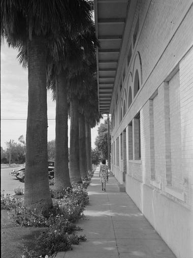 A woman walks down a palm lined street in Tempe in