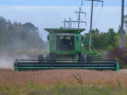A farmer harvests a plot of beans near in St. Johns.