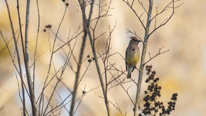 The Annual Wildlife Friendly Yards Tour will be on Feb. 17.