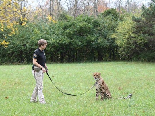 Cincinnati Zoo senior Cat Ambassador trainer Alicia