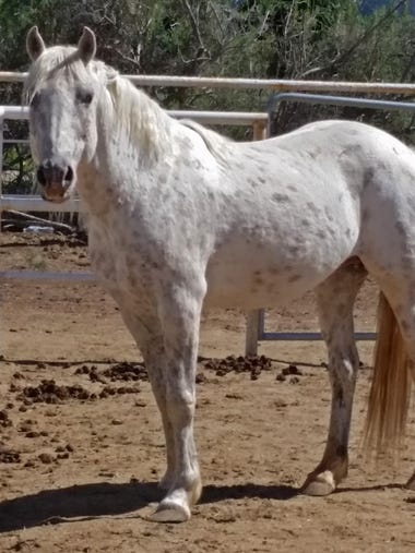 Thumper is a 10-year-old gelding. Originally from a