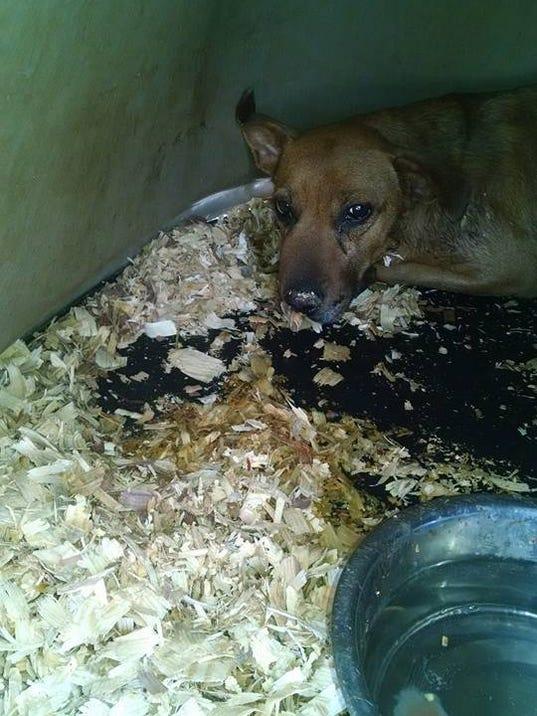 Reward Offered in Arkansas Dog Massacre (photos)
