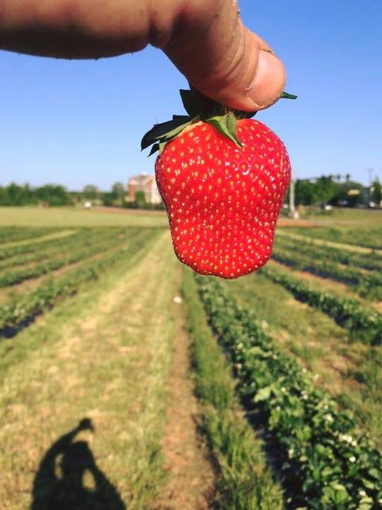 635978754183554492-berries.jpg