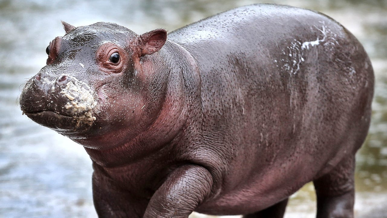 Babies abound at Memphis Zoo