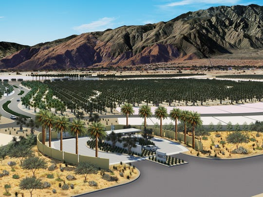 An aerial rendering of the olive groves at Miralon, a forthcoming development in northern Palm Springs.