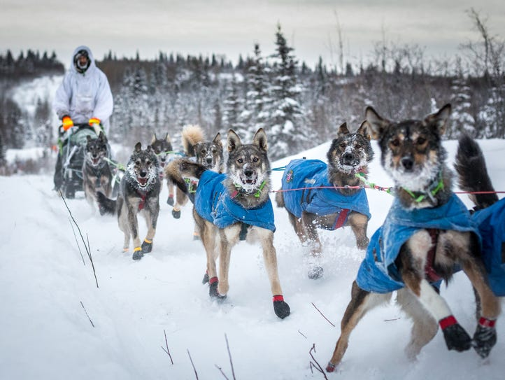 Nicolas Petit will be competing in his eighth Iditarod