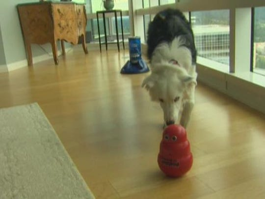 An interactive treat dispenser can keep your dog engaged.