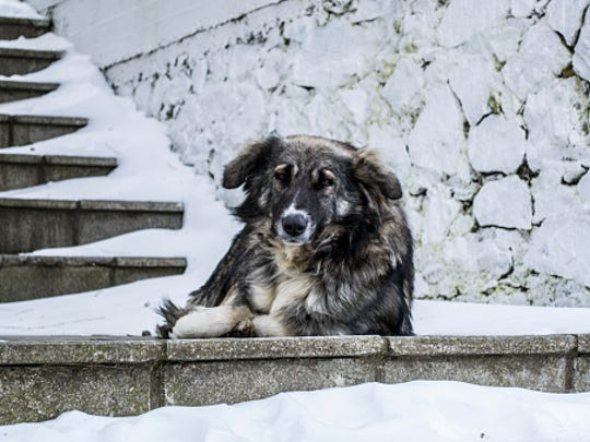 Lonely dog on a cold day