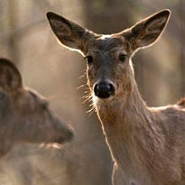 Chronic Wasting Disease found at Mecosta County deer farm