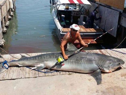 Large Texas Shark_Oliv.jpg