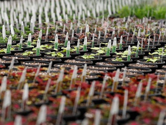 Rows after rows of various plants are waiting for the