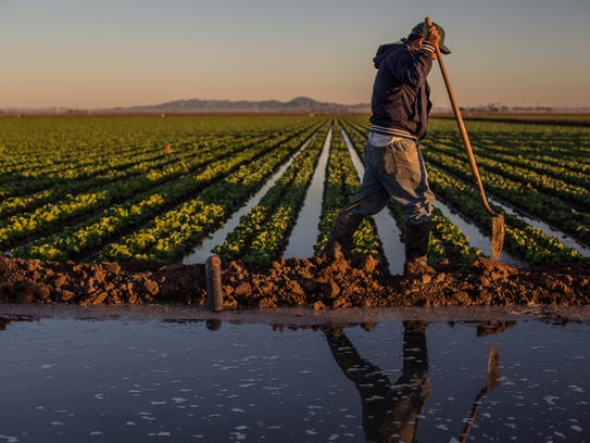 The Lower Colorado River helps irrigate 90% of the