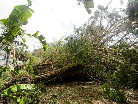 Sanibel Island came through Hurricane Irma far better