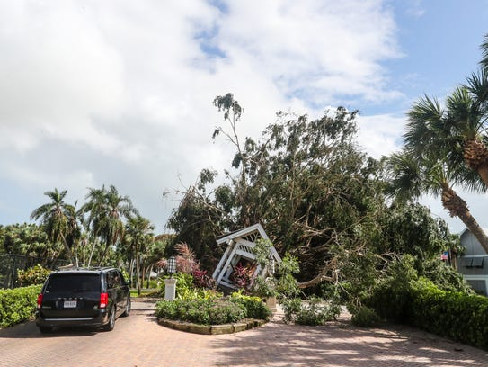 A giant tree at the entrance of Casa Ybel Resort blocked