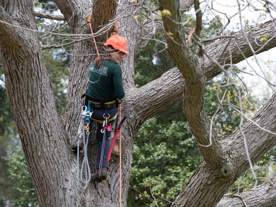 Assistant Arborist Carrie Toth practices climbing a