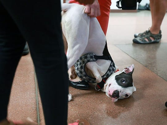 The McCorvey family is reunited with their two-legged dog Lily on Wednesday, Oct. 14, 2015.