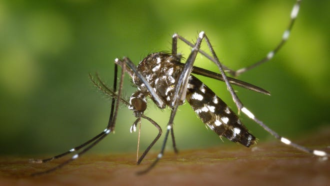 With reports of West Nile virus illnesses in people at a record level and persistent warm and rainy weather, the New Jersey Department of Environmental Protection and New Jersey Department of Health are urging property owners to take steps to reduce mosquito populations and to protect themselves against the risk of mosquito-borne illnesses.