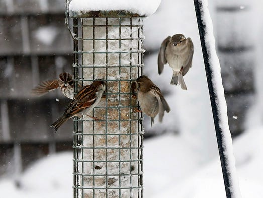 Sawbuzz and sparrows sing the refrain of return