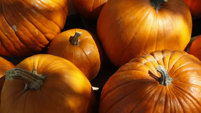Pumpkins are the signature of the Thanksgiving season, so use them right in delicious dishes.