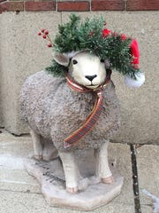 A sheep decorated like Christmas for the Cheviot Bicentennial sheep decorating contest.