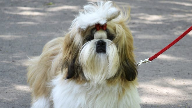 Our Pet Editor trys to help a reader with problems they are having with their Shih Tzu.