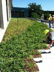 green roof 4.jpg