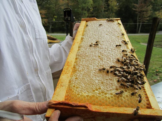 Honeybees in the Hudson Valley produce a delicious