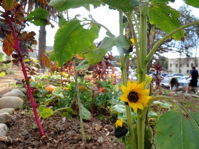 The Gift Garden behind E.P. Foster Library in Ventura