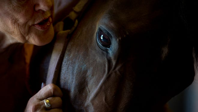 """Jean Duckworth talks to her horse Tom, that survived the Ellis Park Tornado in 2005, at Double M Stables in Evansville, Ind., on Thursday, Aug. 31, 2017. After taking Tom in when the original owners weren't identified, Duckworth treated Tom's trauma from the tornado with aromatherapy oils every day for six months. As a result of the aromatherapy, she says that he """"became a different horse."""""""