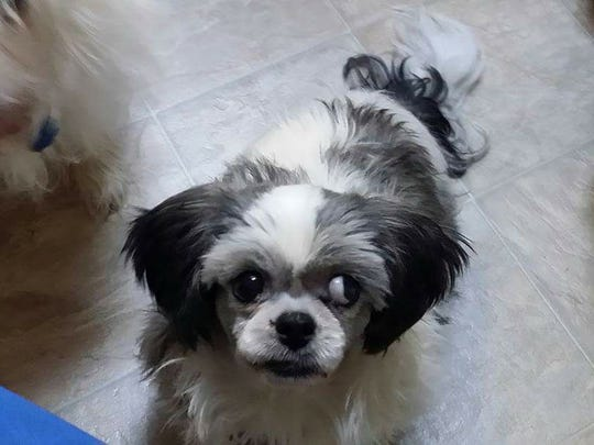 Have you seen me? I was in a car that was stolen in Fort Myers and abandoned in Naples. My family misses me!