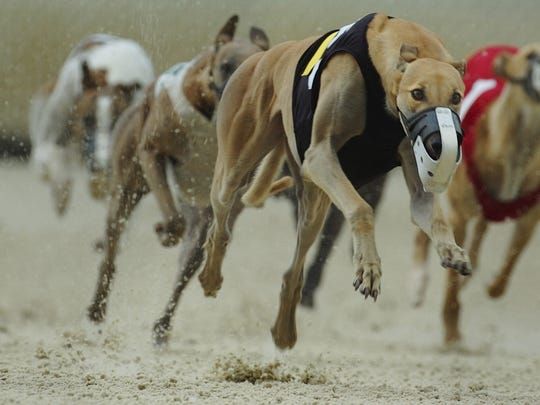 Decoupling legislation could bring the heavy amount of dog racing to an end at the Naples-Fort Myers Greyhound track.