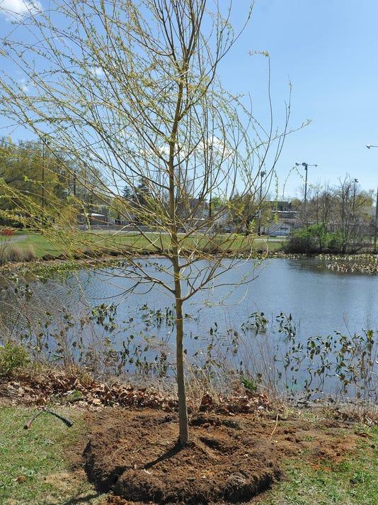 Millville's annual Arbor Day 3 (2).jpg