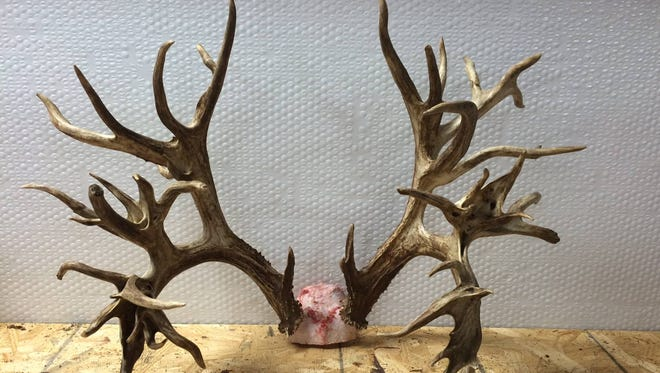 The antlers from a potential world record whitetail deer killed in Sumner County last week could be worth $100,000.