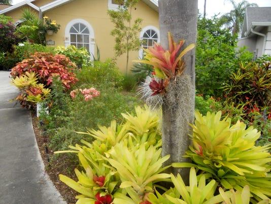 Florida-friendly-home-no-grass-.JPG